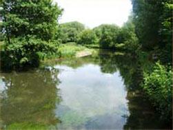 The River Teste