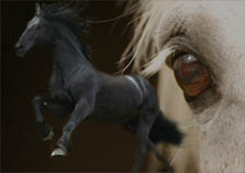 Medieval horses - destrier, palfrey, courser